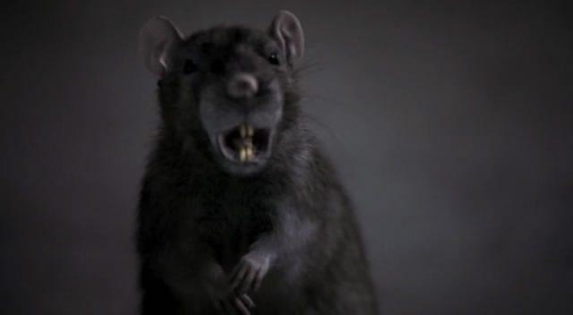 The Rats - Rat