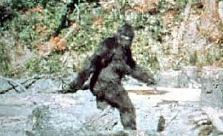 the-bigfoot-diaries-pic-4