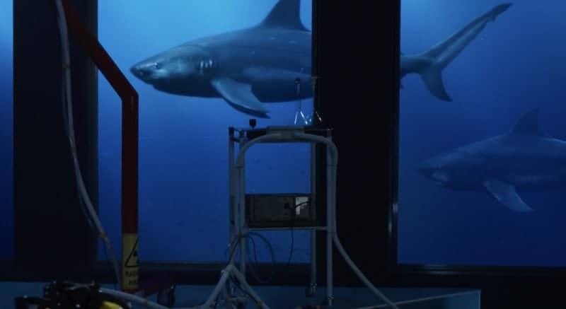 Deep Blue Sea 2 2