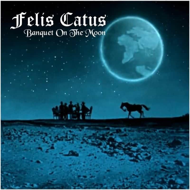 Felis Catus 1