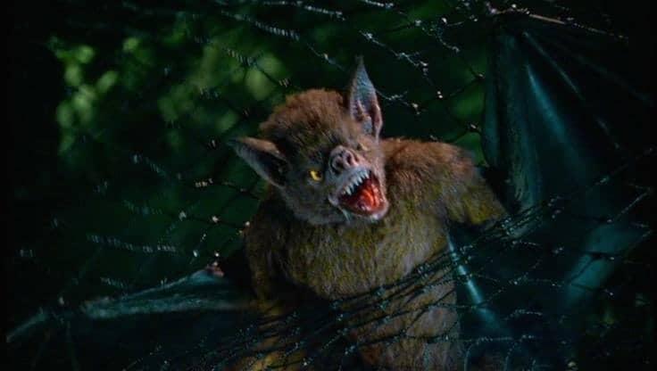 Vampire Bats 5
