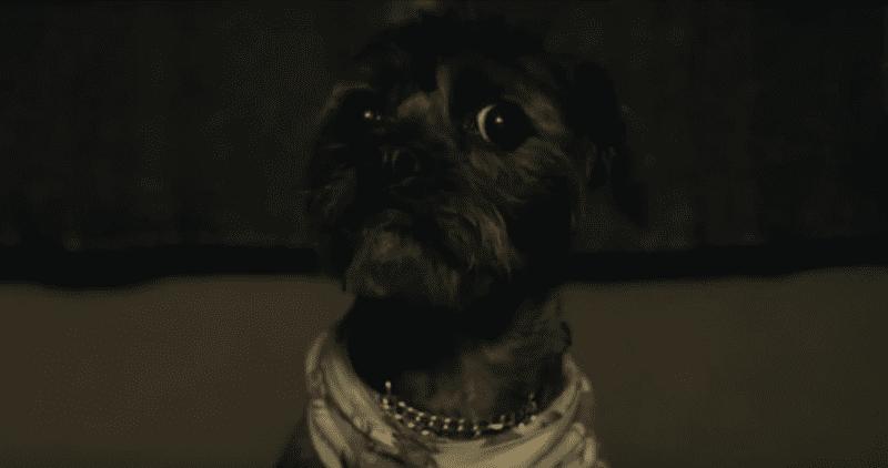 Doggy 3